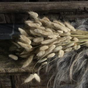 Lagurus ovatus naturel 100 gram
