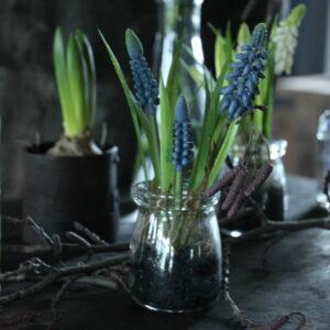 Blauwe druifjes (kunst) in glas