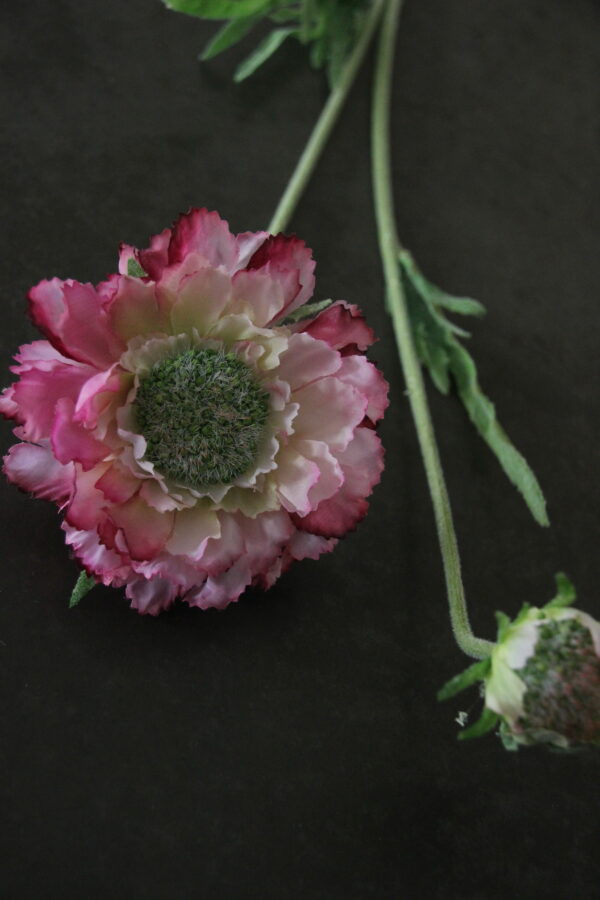 Scabiosa roze kunst 53 cm
